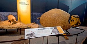 5-glyptodont-and-armadillo-c-nhm